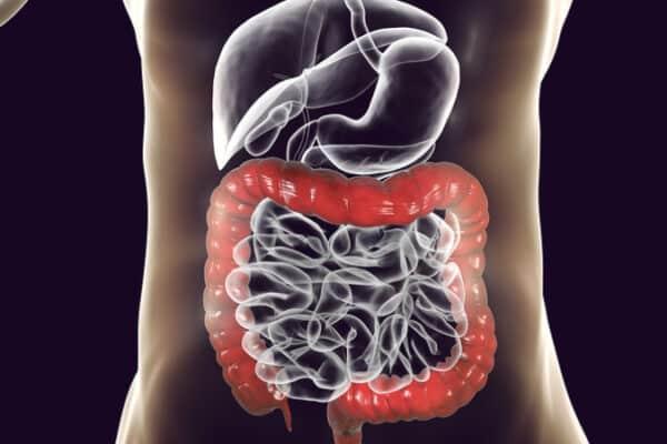 ações melatonina no intestino