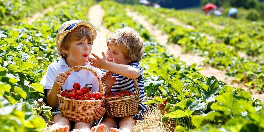 O que é alimentação orgânica? Definição + Benefícios