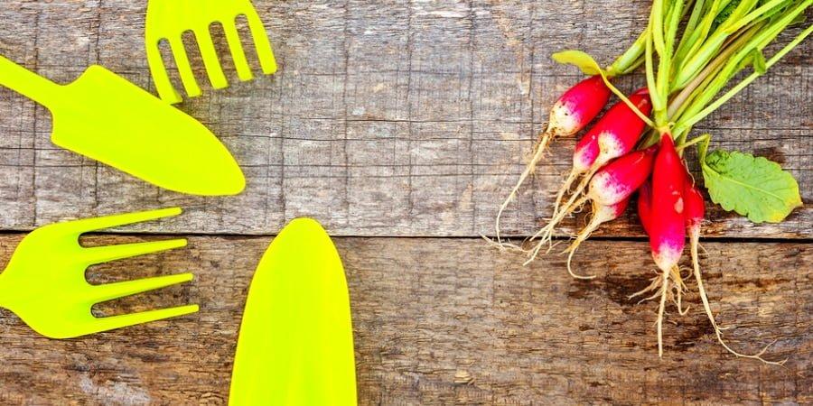 Como fazer uma horta em casa em 4 passos